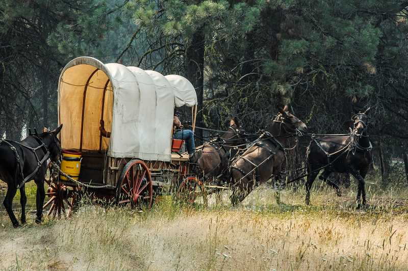 by: COURTESY PHOTO: MARK MCBREARTY - Mules worked hard to pull this wagon out of water last week on The Ochoco Odyssey.