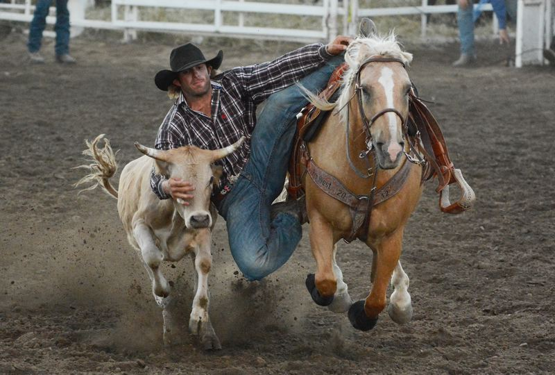 by: JOHN WILLIAM HOWARD - Jacob Stacey of Moses Lake, Wash. makes the dangerous leap from his horse to the steer, attempting to wrestle the steer to the ground with his bare hands.