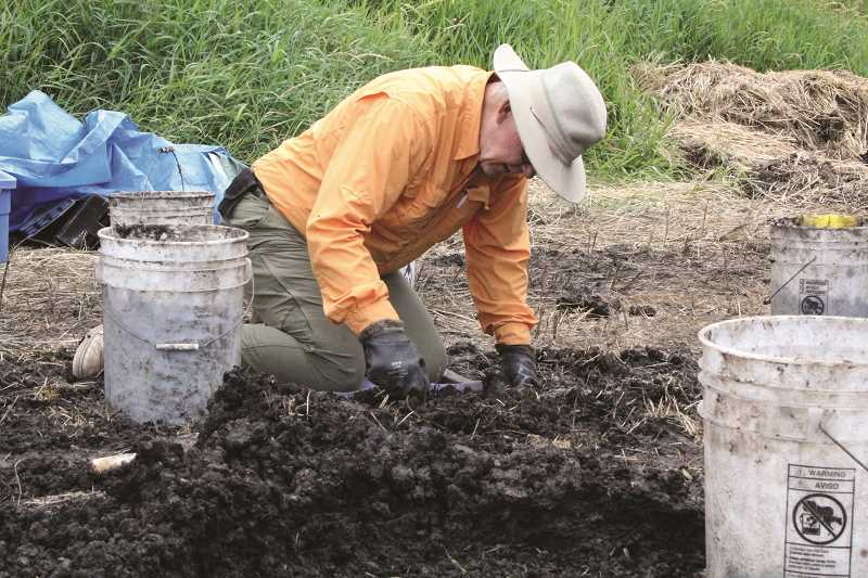 by: TYLER FRANCKE | WOODBURN INDEPENDENT - Steve Ludeman, an artist and Oregon Archaeological Society member from Welches, sifts through excavated soil near Legion Park last week, in search of buried biological treasures.