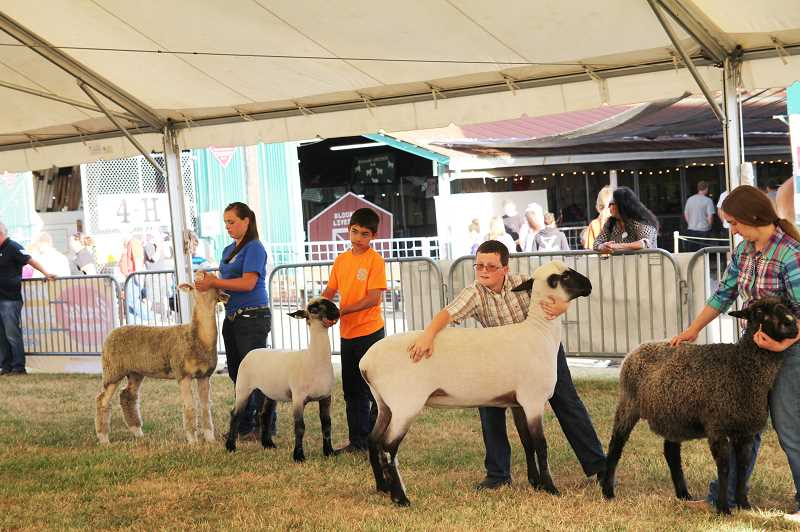 Photo Credit: NEWS-TIMES PHOTO: STEPHANIE HAUGEN - Kids wrangled their sheep in the show rings on hot afternoon for a chance at blue ribbons.