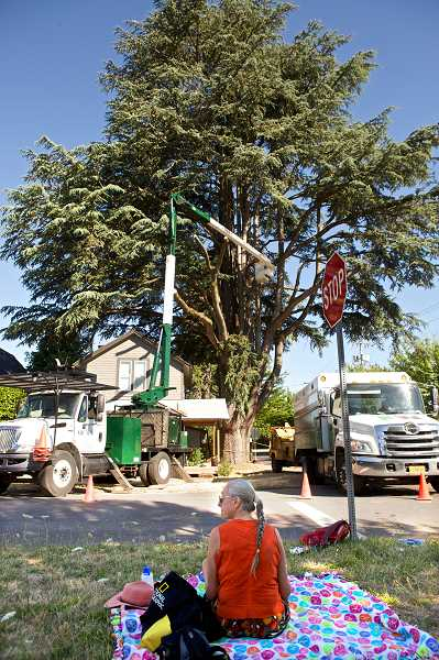 Photo Credit: JAIME VALDEZ - Sherwood historian June Reynolds watches as crews works to cut down a 119-year-old Lebanon cedar tree in Old Town Sherwood. Reynolds and others have protested the trees removal and have threatened legal action because of it.
