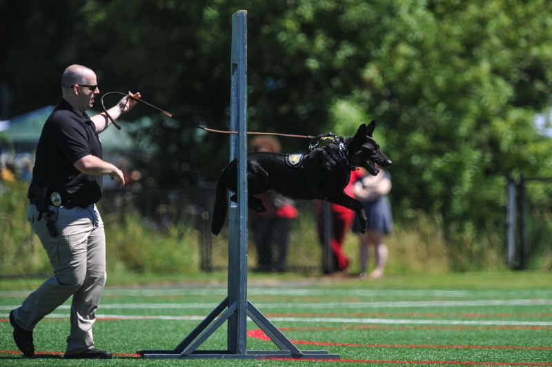 by: TIMES PHOTOS: JOHN LARIVIERE - Beaverton Police K-9 Officer Enzo runs the obstacle course with his partner Officer Rob Wolfe during the Beaverton Police K-9 Unit demonstration at the Howard M. Terpenning Recreation Complex.