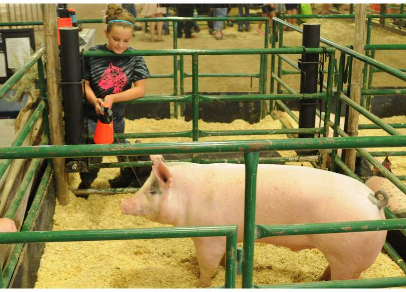 Photo Credit: CENTRAL OREGONIAN FILE PHOTO - Crook County Fairgrounds Manager Casey Daly has been told to expect a significant increase in the amount of show animals at this year's fair. The fair runs Wednesday through Saturday, and entry is free. This year's fair includes a carnival.