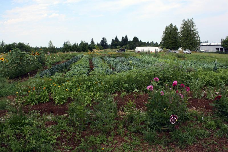 Photo Credit: POST PHOTO: KYLIE WRAY - AntFarms community garden is nearly 2 acres of vegetables that are used in the AntFarm café and donated to those in need.
