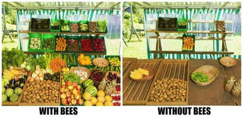 Photo Credit: PHOTO COURTESY OF SWARM PORTLAND  - Our food options would be limited if it wasn't for bees to pollinate crops.