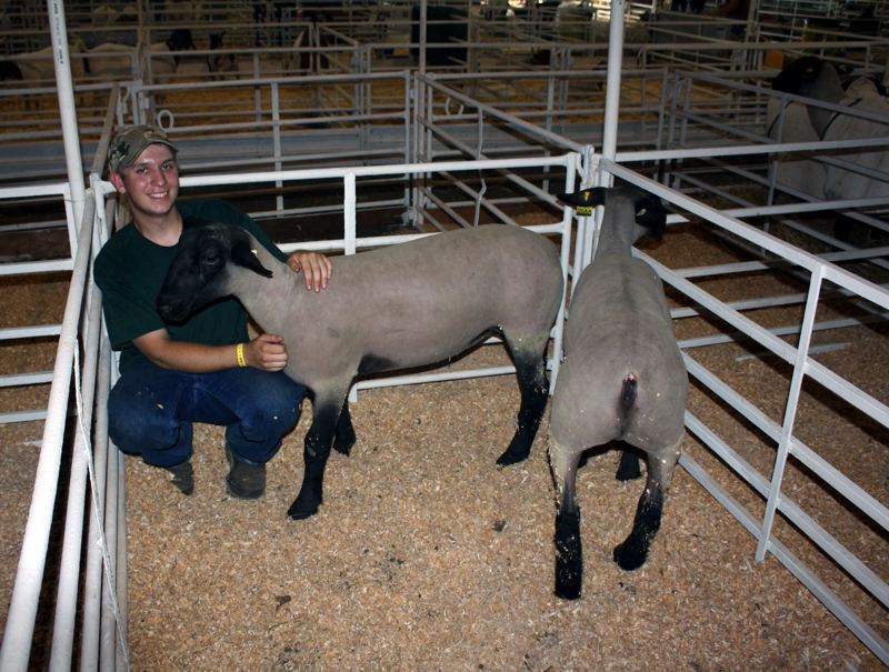Photo Credit: POST PHOTO: KYLIE WRAY - Jacob Johnson, 18, has been involved showing animals at the fair since he was in kindergarten.