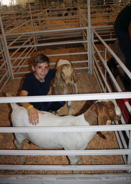Photo Credit: POST PHOTO: KYLIE WRAY - Benjamin Johnson, 11, and his favorite girl Carolina. Carolina and Max, who tried to steal the photographic spotlight, are boer goats.