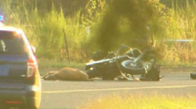Photo Credit: COURTESY: KOIN 6 NEWS - The wreckage of a motorcycle marks the spot where a man died Thursday, Aug. 14, after hitting a deer.
