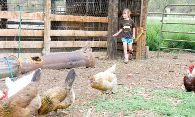 Photo Credit: KEVIN SPERL - Moriah Riley tends to her chickens at her parent's property off of the O'Neil Highway.