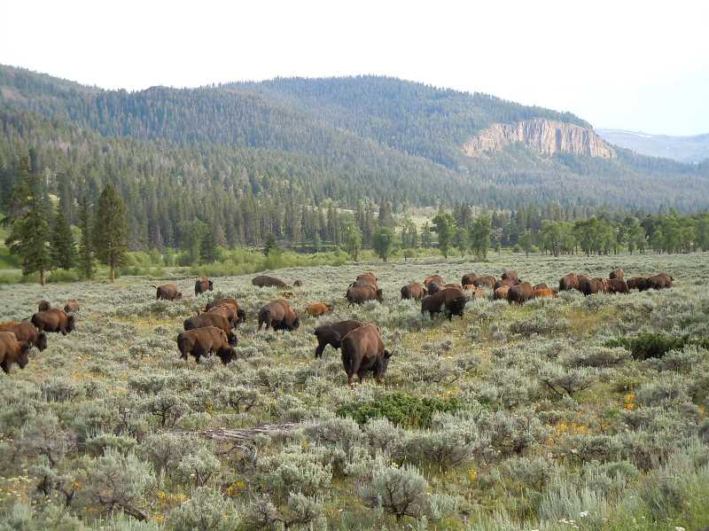 Photo Credit: SCOTT STAATS/SPECIAL TO THE CENTRAL OREGONIAN