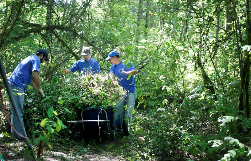 Photo Credit: TIMES PHOTO: JONATHAN HOUSE - Intel employees Jim Shehadi, Mike Miller and John Fan remove a wheelbarrow of ivy and other invasive plants during a clean up event at Dirksen Nature Park in Tigard. More than 320 volunteers helped clean up the park, making it one of the the largest restoration events in city history.