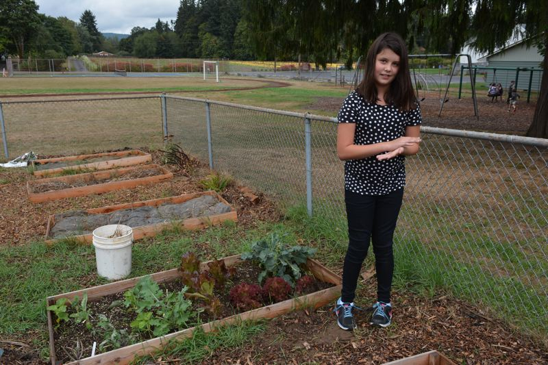 Photo Credit: MARK MILLER - Sophia Johanson-Phillips, a seventh-grade student at Sauvie Island Academy, stands in the community garden she has played a key role in developing over the past year. Last year, when she was in sixth grade, Johanson-Phillips and a classmate successfully applied for a small grant to help get the garden started. The garden is now a learning project for her entire grade and other students at the school, as well as a source of produce for both the school cafeteria and a senior living community in Scappoose.