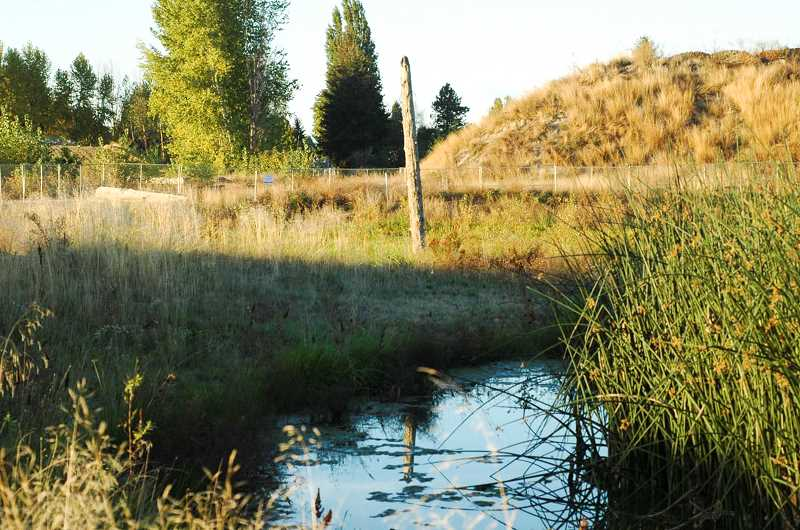 Photo Credit: COURTESY PHOTO: CLEAN WATER SERVICES - This two-acre asphalt pad (left) turned into a lush wetland with 36 plant species (right) over the past two years at Fernhill Wetlands, which is adjacent to the Forest Grove Wastewater Treatment Facility operated by Clean Water Services. Work will finish this month on a similar project but much larger project -- a highly visible, 90-acre wetland just to the south.