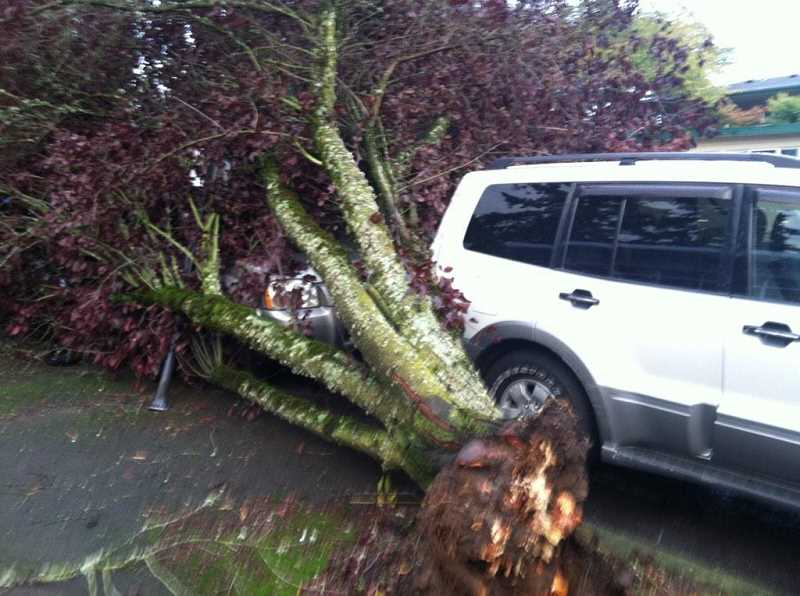Two vehicles were struck by a falling tree at Fifth Street and A Avenue on Saturday.