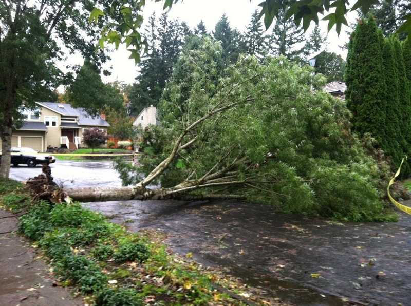 This downed tree blocked the road at Albert Circle and Deerbrush Avenue.