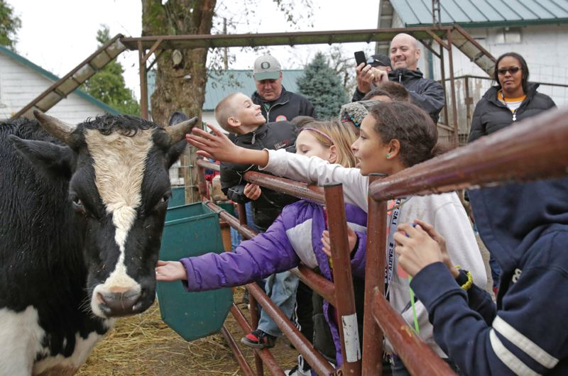 Photo Credit: TIMES PHOTO: JONATHAN HOUSE - Barnes Elementary School fifth-graders pet a cow at Plumper Pumpkin Patch.