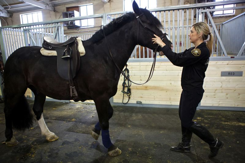 Photo Credit: TRIBUNE PHOTO: JAIME VALDEZ - Cassandra Wells, who is an offi cer with the Portland Police Bureau's Mounted Patrol Unit offi cer, warms up Murphy before heading out to the outdoor arena at Centennial Mills. The horses are back at the former fl our mill after eight new pre-made stalls were installed in a safe area of the building.