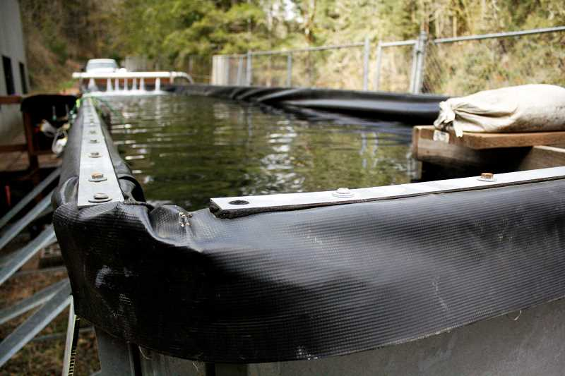 POST PHOTO: KYLIE WRAY - The Bull Run Acclimation Facility is being used for spring chinook salmon from Bonneville Hatchery to imprint on the Bull Run River water before being released.