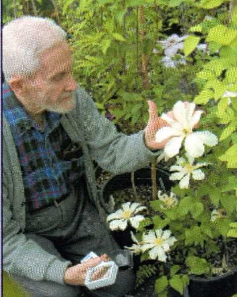 SUBMITTED PHOTO - Nancy Dunis learned alot about clematis and life from her friend, Brewster Rogerson.