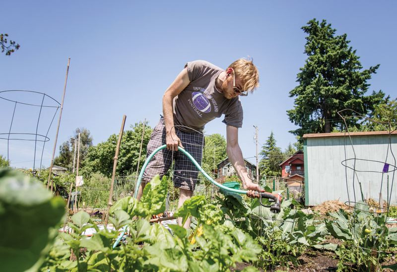 PORTLAND TRIBUNE: JONATHAN HOUSE - Jacob Bard waters his familys plot at the Johns Community Garden in St. Johns. The Water Bureau has posted most of the site on its surplus properties page.