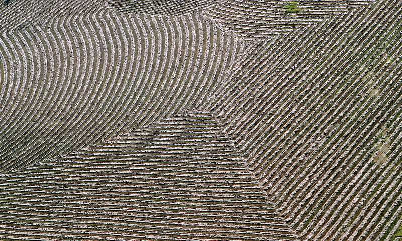 TIMES PHOTO: MILES VANCE - A Willamette Valley field shows its geometric pattern outside of Donald.