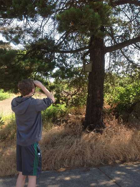 SUBMITTED PHOTO: KALEB MCKERN - Harrison Hart, a student in Jonathan Davies Biology/Life Science course, watches for birds behind West Linn High School during this year's summer program.