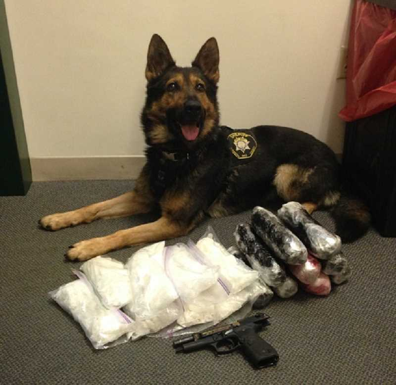 SUBMITTED PHOTO - A Washington County Sheriff's K9 poses with methamphetamine and other items seized during the service of numerous search warrants, most of them on Thursday and Friday.