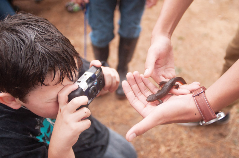PAMPLIN MEDIA GROUP: JOSH KULLA - Skyler Smith, a Multnomah ESD Outdoor School camper from Ron Russell Middle School in east Portland, photographs a salamander during a recent demonstration at Camp Howard in the Mt. Hood National Forest.
