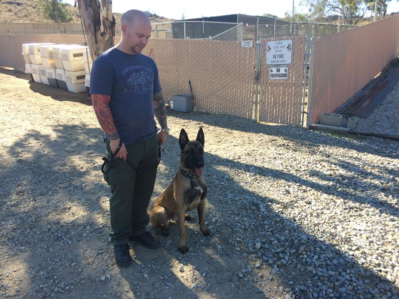 COLUMBIA COUNTY SHERIFF'S OFFICE PHOTO - Columbia County Sheriff's Deputy Ryan Dews and Lars, a Belgian Malinois, are soon to be a crime fighting duo. Lars will begin work alongside his trainer and partner in 2016.