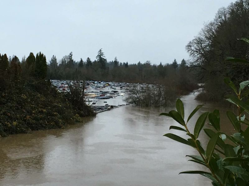 SUBMITTED BY BRIAN WEGENER - Pick-n-Pull, a self-service auto parts store near Sherwood, was inundated Friday by rising waters. The salvage yard sits in lowlands near the confluence of Rock Creek and the Tualatin River.