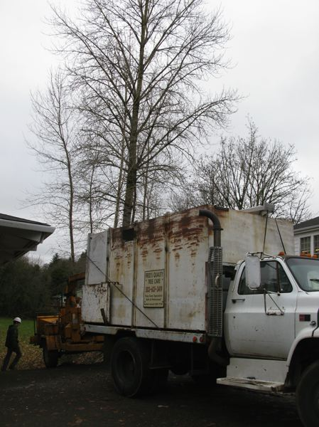 PHOTO BY: RAYMOND RENDLEMAN - On Dec. 15, the Oregon City School District hired Fred's Quality Tree Care to cut down some large, healthy trees behind Barclay School.