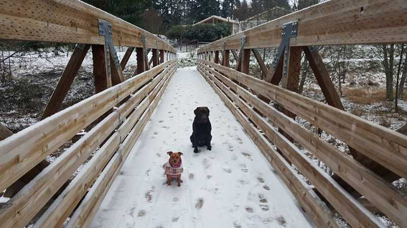 SUBMITTED PHOTO - Two dogs enjoy the snow at a frosty Jack Park in Tigard on Jan. 3.
