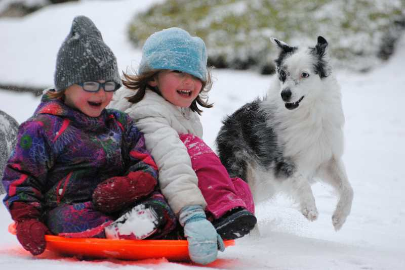 PHOTO COURTESY SARAH MORRIS - Lucy, age 4, and Annie Morris, 6, take to the streets after the snowstorm with their dog Bess.