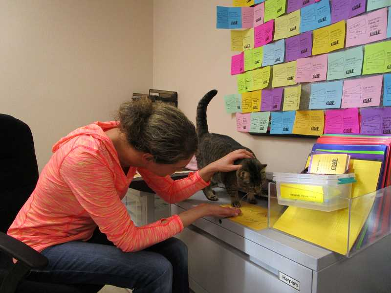 SUBMITTED PHOTO - Brittany Chandler, of Beaverton, pets Lacey, a 6-year-old tabby at Sherwood's Cat Adoption Team. The cat was adopted on Sunday after 5 years of waiting, according to the shelter.
