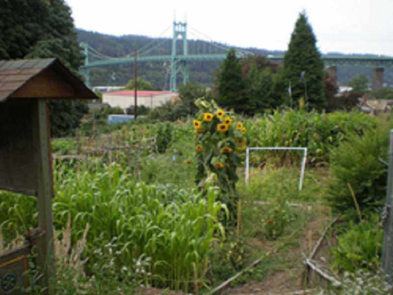COURTESY: PORTLAND PARKS & RECREATION  - Community gardeners have come out in force against the parks bureau's early proposed cuts package. The budget process continues Thursday with another meeting and wraps up in late spring.  Johns Community Garden in St. Johns is pictured here.