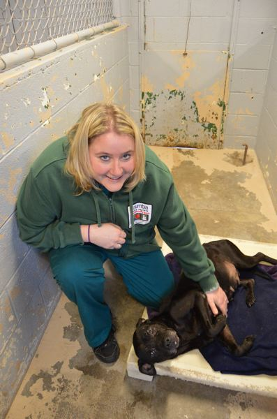 COURTNEY VAUGHN - Lisa Beggio interacts with a stray dog at the Columbia Humane Society shelter in St. Helens. Beggio was recently named program manager at CHS.