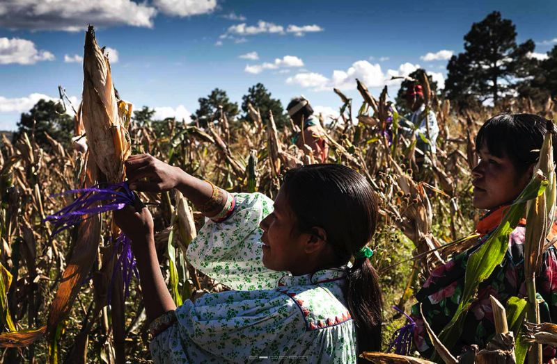 COURTESY HOLLYWOOD THEATRE - A scene from Sunu, a documentary about Mexican corn growers, which will be premiered at the Hollywood Theatre.