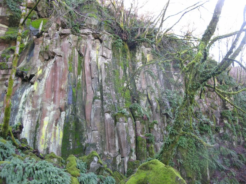 PHOTO: RAYMOND RENDLEMAN - Trees that were topped in Oregon City were adjacent to this tall basalt cliff and boulder field that are beloved by the neighborhood on the southwest side of Waterboard Park.