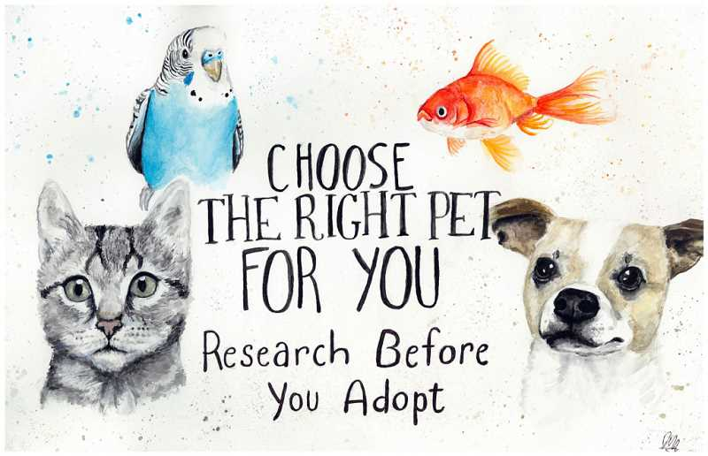 COURTESY IMAGE: OREGON HUMANE SOCIETY - Hillsboro seventh-grader Dylan Mead won the Oregon Humane Society poster contest with his drawing highlighting the importance of choosing the right pet.