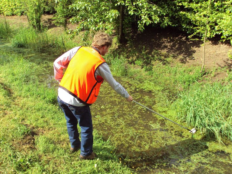PHOTO COURTESY CCVCD - A Clackamas County Vector Control District employee collects a sample of larva in a local water source perfect for mosquito breeding.