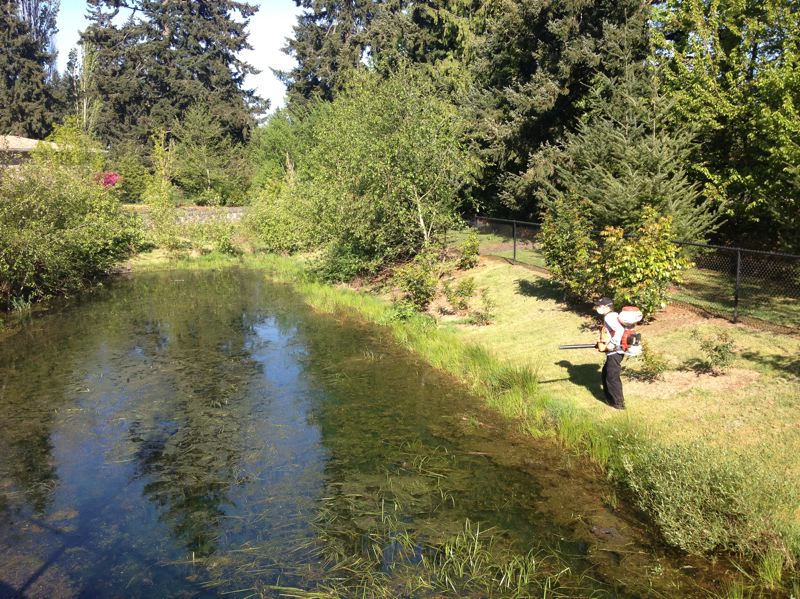PHOTO COURTESY CCVCD - Clackamas County Vector Control sprays larvacide at a known mosquito source in Clackamas County.