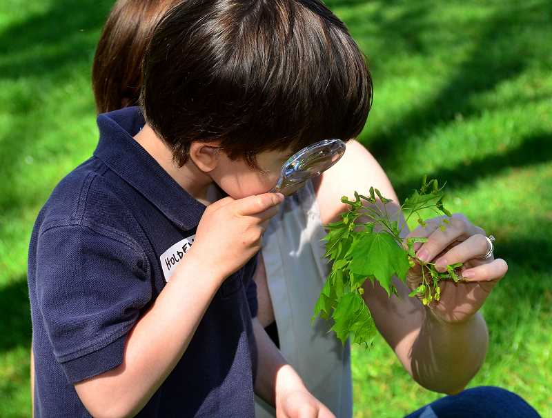 REVIEW PHOTO: VERN UYETAKE - Holden White, 4, studies a tree leaf.