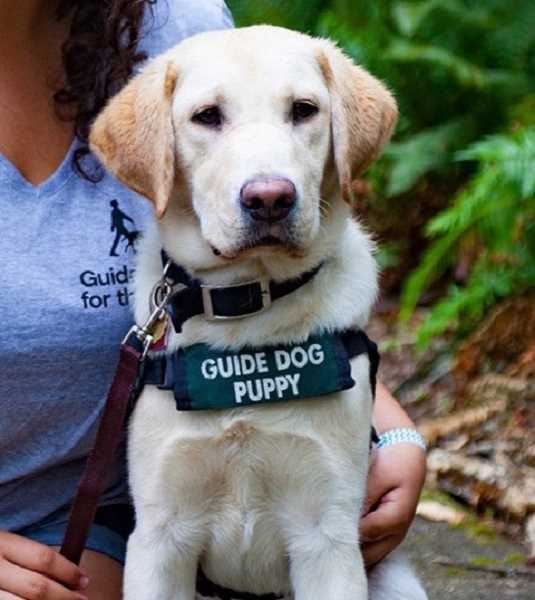 SUBMITTED PHOTO: GUIDE DOGS FOR THE BLIND - Join the fun when WLACC tours the training facilities of Guide Dogs for the Blind on Sept. 28.