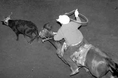 by: courtesy of The Madras Pioneer  - Sean Santucci of Prineville competes here in team roping as a heeler at the Jefferson County rodeo in Madras last weekend. Santucci, a graduate of Crook County High School, currently sits in 23rd in the standings as a heeler.