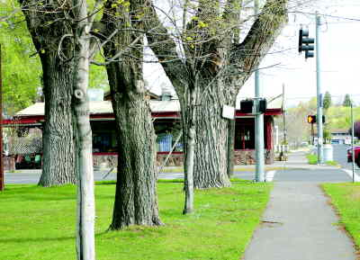 by: ANNEMARIE KNEPPER/CENTRAL OREGONIAN - While safety concerns have sparked the planned removal of seven trees at Pioneer Park, Parks and Rec officials say the park will still remain shady.