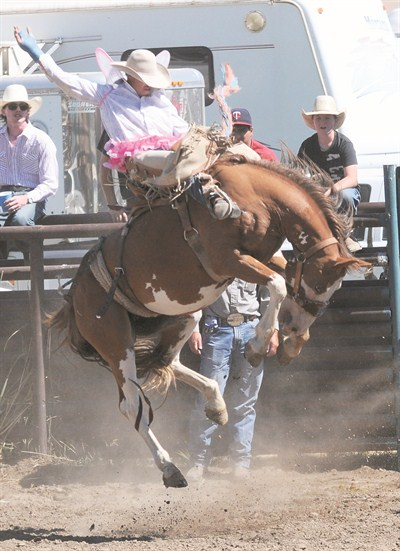 by: ANGIE BERNARD/CENTRAL OREGONIAN - T.B. Hannan competes in saddle bronc riding at the Paulina Amateur Rodeo wearing a pink tutu and wings after losing a bet. Hannan had a score of 63 and did not place in the event.