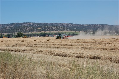 by: RAMONA MCCALLISTER/CENTRAL OREGONIAN - Crops in Central Oregon, especially wheat, hay, and grass should be a strong market for local farmers.