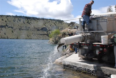 by: Photo courtesy of Portland General Electric - PGE fisheries biologist Jim Bartlett releases salmon into Lake Billy Chinook to allow the fish to continue their migration back upstream, for the first time in decades.