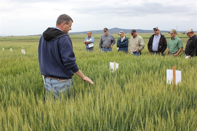 by: Submitted Photo - Dr. Mike Flowers, OSU Extension cereal specialist from Corvallis, shows different wheat variety trials to local growers and fieldmen.