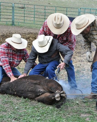 by: Submitted Photo - McKay brands a calf, with grandson Todd, and sons Herb and Tom.